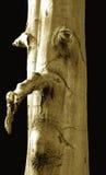Albero con viso umano Immagini Stock