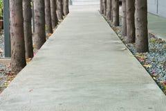 Albero concentrare del marciapiede Fotografia Stock Libera da Diritti