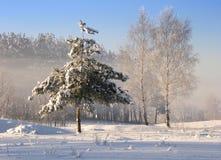 Albero congelato fotografia stock libera da diritti