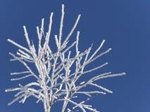 Albero congelato Immagine Stock Libera da Diritti