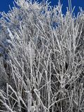 Albero congelato fotografie stock