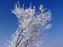 Albero congelato fotografia stock