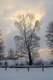 Albero congelato al tramonto Immagini Stock Libere da Diritti