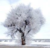 Albero congelato con neve sulla terra immagine stock