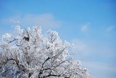 Albero congelato della nebbia Fotografie Stock