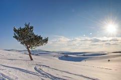 Albero congelato sul campo e sul cielo blu di inverno Immagine Stock
