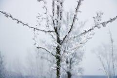 Albero congelato sull'inverno immagini stock