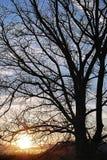 Albero contro il tramonto Fotografia Stock Libera da Diritti