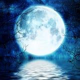 Albero contro la luna piena Fotografia Stock