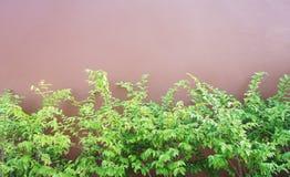 Albero contro la parete Fotografie Stock Libere da Diritti