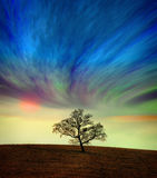 Albero contro un cielo surreale Immagine Stock