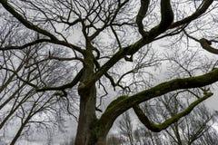 Albero coperto di muschio in foresta Immagini Stock