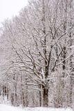 Albero coperto di neve immagini stock