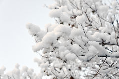 Albero coperto di neve Fotografia Stock