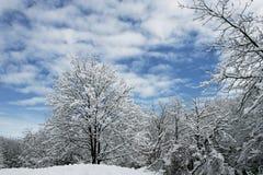 Albero coperto di neve fotografie stock