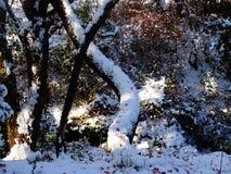 Albero coperto di neve fresca Fotografia Stock Libera da Diritti