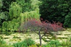 Albero coperto in fiori ed in fiume rossi Immagini Stock Libere da Diritti