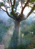 Albero coperto in fumo Fotografia Stock