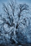 Albero coperto in ghiaccio - blu immagini stock libere da diritti