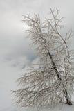 Albero coperto nel gelo Immagini Stock Libere da Diritti