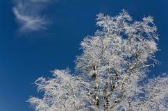 Albero coperto in neve di cielo blu Immagini Stock