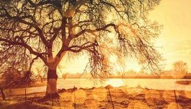 Albero coperto su pioggia durante il tramonto fotografia stock