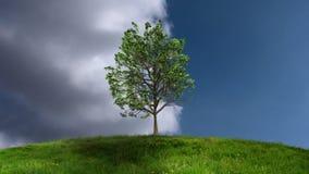 Albero crescente con le nuvole di Timelapse illustrazione di stock