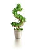 Albero crescente del dollaro Immagine Stock