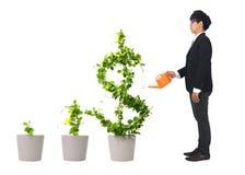 Albero crescente del dollaro Fotografia Stock
