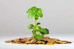 Albero crescente su un mucchio di soldi Fotografia Stock