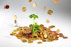 Albero crescente sulle monete Fotografia Stock