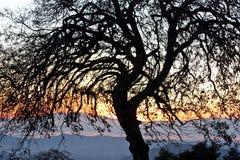 albero curvato Fotografia Stock Libera da Diritti