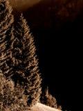 Albero d'ardore Fotografia Stock Libera da Diritti