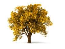 albero d'autunno 3d illustrazione vettoriale