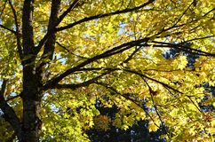 Albero d'autunno Fotografie Stock