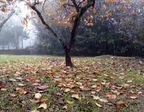 Albero d'autunno Fotografie Stock Libere da Diritti