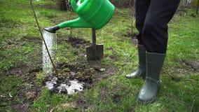 Albero d'innaffiatura dell'agricoltore con una latta Giardiniere che pianta albero nel giardino di primavera stock footage