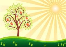 Albero da frutto ed il sole Fotografia Stock
