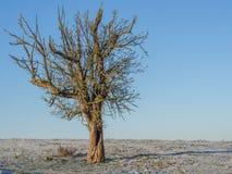 Albero da frutto a gennaio Immagini Stock Libere da Diritti