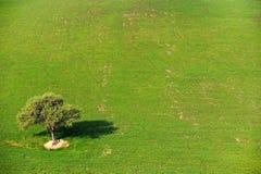 Albero da solo nel campo del paese Fotografia Stock Libera da Diritti