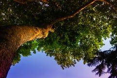 Albero da sotto in cielo di tramonto Fotografie Stock