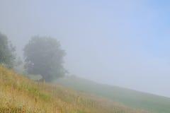 Albero da un lato nebbioso della collina Fotografia Stock Libera da Diritti