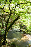 Albero dal fiume Fotografia Stock Libera da Diritti