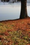 Albero dal lago Fotografie Stock