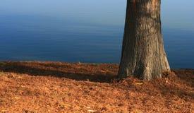 Albero dal lago Immagine Stock