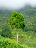 Albero dal terrazzo della nuvola di Yunhe Fotografia Stock