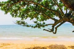 Albero dalla spiaggia Fotografia Stock Libera da Diritti