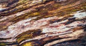 Albero decomposto caduto in foresta immagine stock libera da diritti