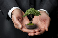 Albero dei bonsai di saggezza di affari Immagini Stock Libere da Diritti
