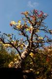 Albero dei bonsai in giardino Fotografia Stock Libera da Diritti